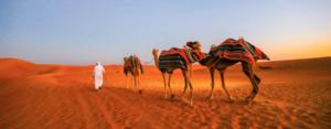 All Tours – Dubai, Abu Dhabi and Sharjah